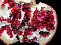 Granatowiec owoc w bąblach Obraz Royalty Free