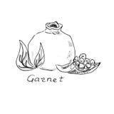 Granatowiec szczotkarski węgiel drzewny rysunek rysujący ręki ilustracyjny ilustrator jak spojrzenie robi pastelowi tradycyjny Cz Fotografia Royalty Free