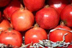 granatowowie Zdjęcie Stock