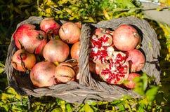 Granatowowie w, znacząco karmowy nadprograma bogactwo w witaminach i przeciwutleniacze koszykowej, sezonowej owoc, obrazy stock