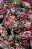 Granchi freschi nel mercato dei frutti di mare filo dell'artropodo concetto dell'artiglio e dell'armatura Granchio fresco del mar fotografia stock