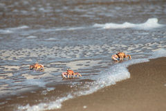 granchi sulla costa fotografie stock