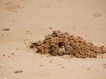 Granchio che scava un foro nella sabbia Fotografia Stock Libera da Diritti