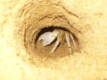 Granchio che si nasconde in sabbia in una spiaggia Immagini Stock
