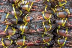Granchio crudo fresco al mercato dei frutti di mare Immagine Stock
