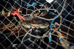 Granchio crudo fresco al mercato dei frutti di mare o all'alimento della via Immagine Stock