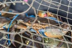 Granchio crudo fresco al mercato dei frutti di mare o all'alimento della via Fotografia Stock Libera da Diritti