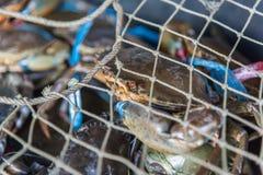 Granchio crudo fresco al mercato dei frutti di mare o all'alimento della via Fotografia Stock