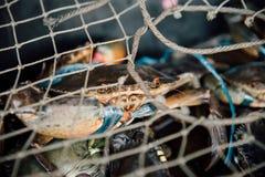 Granchio crudo fresco al mercato dei frutti di mare o all'alimento della via Immagini Stock
