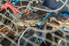 Granchio crudo fresco al mercato dei frutti di mare o all'alimento della via Fotografie Stock Libere da Diritti
