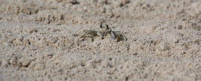 Granchio del fantasma in sabbia Immagine Stock