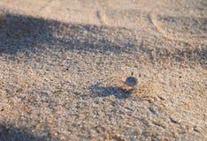 Granchio del fantasma sulla spiaggia Fotografie Stock