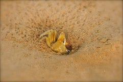 Granchio del mare Fotografia Stock