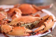 Granchio del mare bollito in ristorante alla provincia Tailandia di Chantaburi Fotografia Stock Libera da Diritti