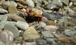 Granchio dell'eremita che entra in mare Fotografia Stock