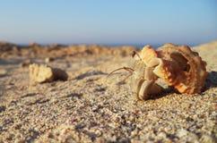 Granchio dell'eremita sulla spiaggia Immagine Stock Libera da Diritti