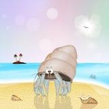 Granchio dell'eremita sulla spiaggia Fotografia Stock
