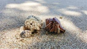 Granchio dell'eremita sulla spiaggia immagine stock