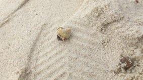 Granchio dell'eremita sulla spiaggia bianca della sabbia stock footage