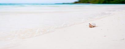 Granchio dell'eremita sulla spiaggia dei Maldives tropicali fotografie stock