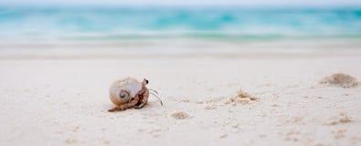 Granchio dell'eremita sulla spiaggia tropicale fotografie stock