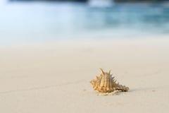 Granchio della conchiglia sulla spiaggia Fotografia Stock Libera da Diritti