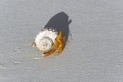 Granchio di eremita dello sbarco Fotografia Stock Libera da Diritti
