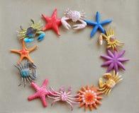 Granchio e stelle marine sul documento della sabbia Fotografie Stock