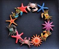 Granchio e stelle marine sul documento nero della sabbia Immagine Stock Libera da Diritti