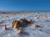 Granchio, la riva di mare congelata di inverno Fotografia Stock Libera da Diritti
