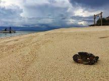 Granchio locale nero sulla spiaggia, munknok del KOH, Tailandia fotografie stock libere da diritti