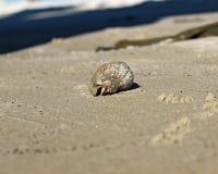 Granchio nelle coperture sulla spiaggia Immagini Stock