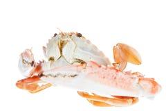 Granchio nuotatore, isolato su fondo bianco Fotografia Stock Libera da Diritti