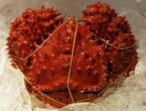 Granchio rosso Fotografie Stock Libere da Diritti