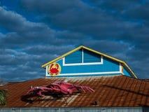 Granchio su un tetto Immagine Stock Libera da Diritti