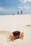 Granchio su una spiaggia immagine stock libera da diritti