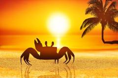 Granchio sulla sabbia immagini stock libere da diritti