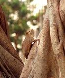 Grand écureuil d'arbre de Brown Photo stock