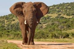 Grand éléphant dans la route Photos libres de droits