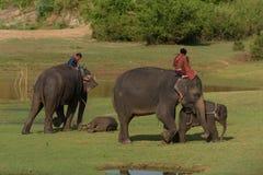 Grand éléphant et bébé marchant dans la jungle image libre de droits