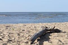 Grand accroc sur la plage de sable Image libre de droits
