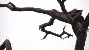 Grand aigle au-dessus de la branche commençant à voler dans le mouvement lent
