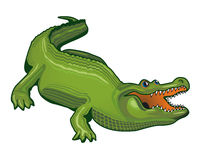 Grand alligator Photographie stock