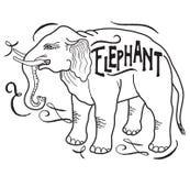 grand animal Éléphant sur un fond blanc Images libres de droits