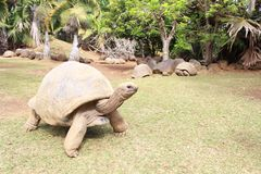 Grand animal rare Photographie stock libre de droits