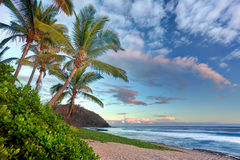 Grand Anse beach at sunset. Scenic view of palm trees on Grande Anse beach at sunset, Reunion Island Stock Photo