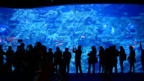 The Grand Aquarium of ocean park, hong kong. Joyful visitors in front of the 13m wide huge aquarium holding large species of marine lives at the grand aquarium stock video