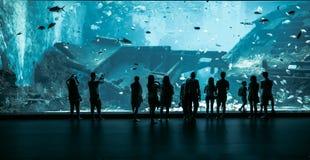 Grand aquarium à Singapour Photos stock