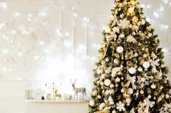 Grand arbre à la maison dans une atmosphère confortable image libre de droits