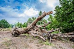 Grand arbre à vendre Photo stock